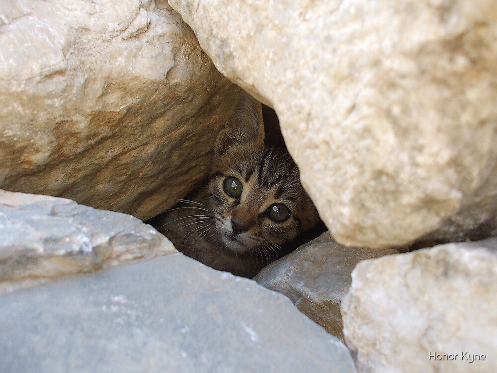 Peek-A-Boo! by Honor Kyne