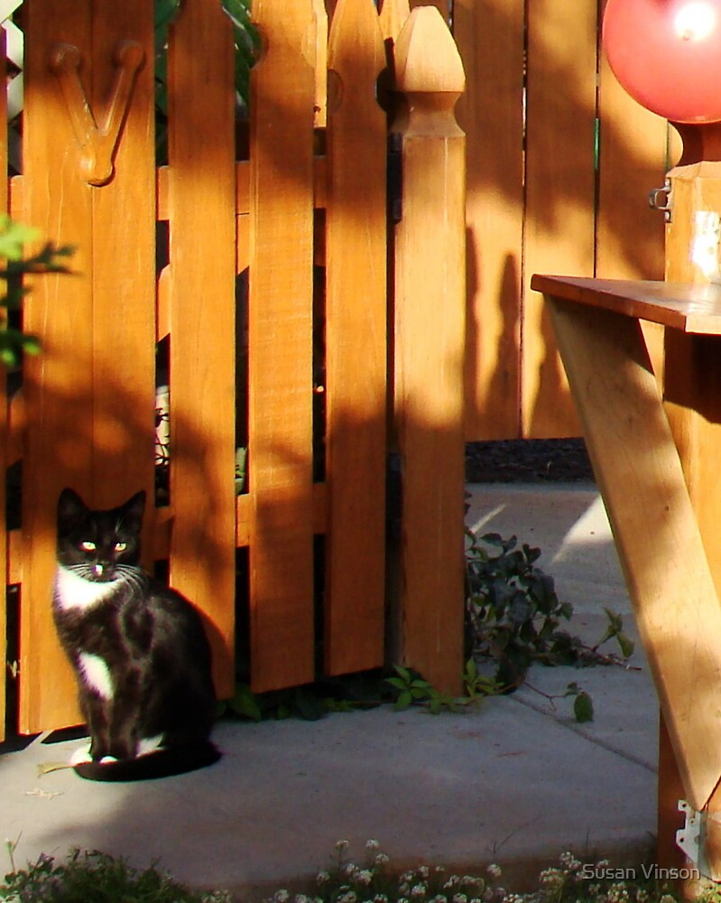 Kitten At The Gate by Susan Vinson