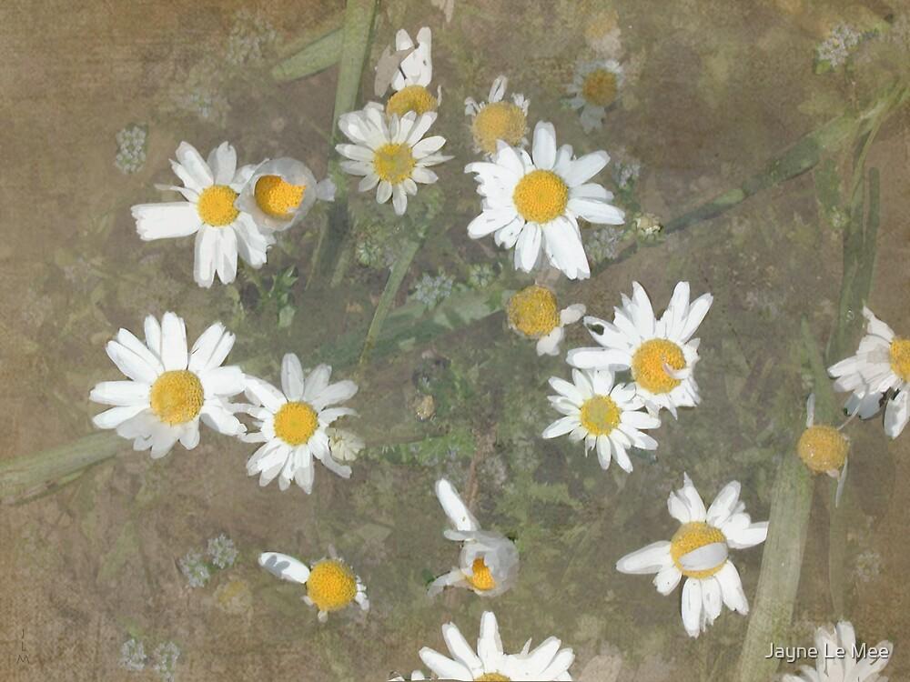 DaisyLand by Jayne Le Mee