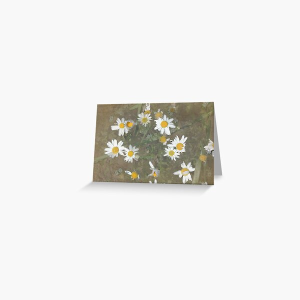 DaisyLand Greeting Card