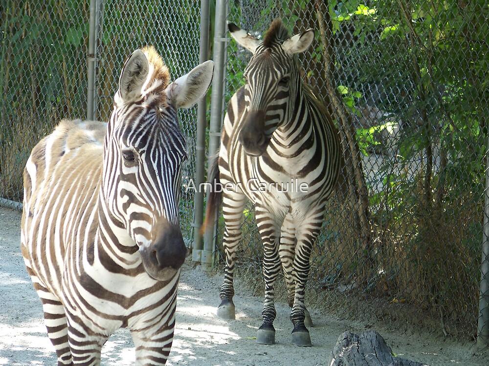 A Zebra's Life by Amber Carwile