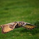 Rock Eagle Owl by Anne-Marie Bokslag