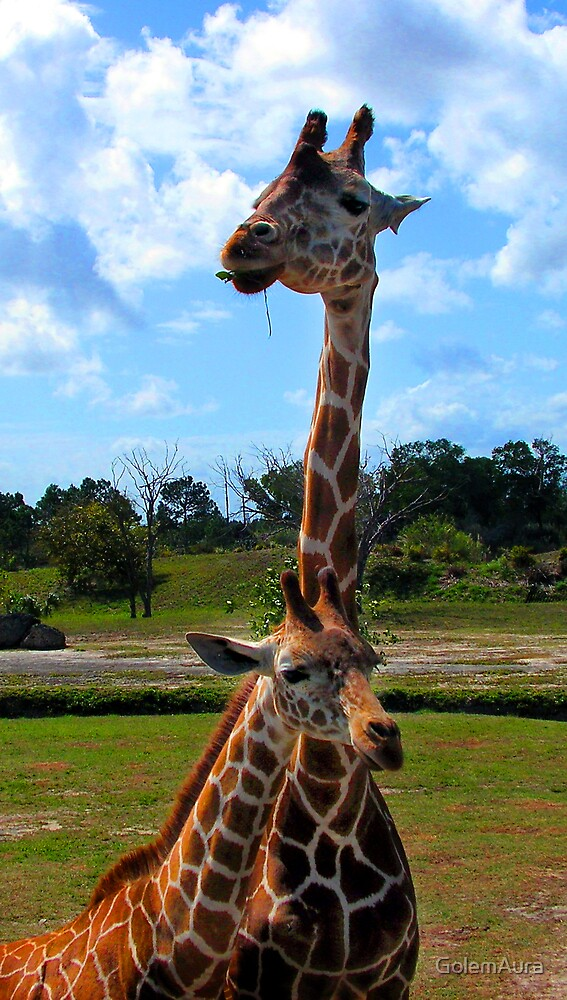 Giraffe and Babe by GolemAura