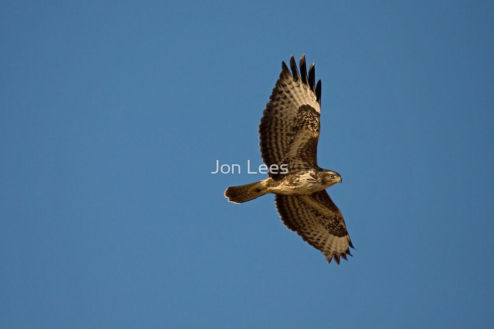 buzzard by Jon Lees