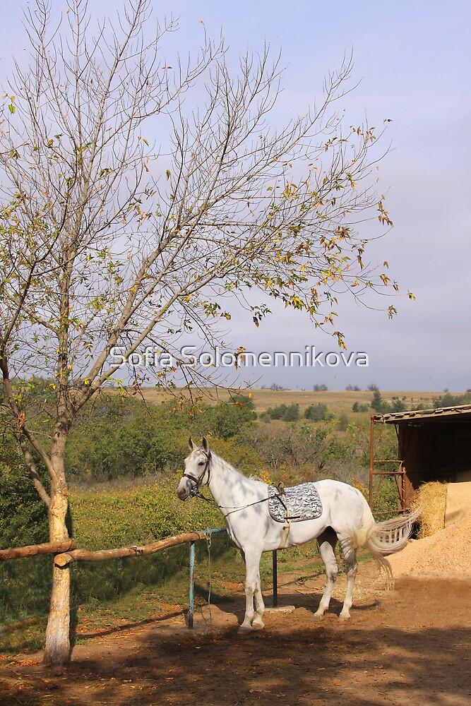A Beautiful Day, a beautiful horse by Sofia Solomennikova