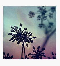 Gravity Bloom Photographic Print
