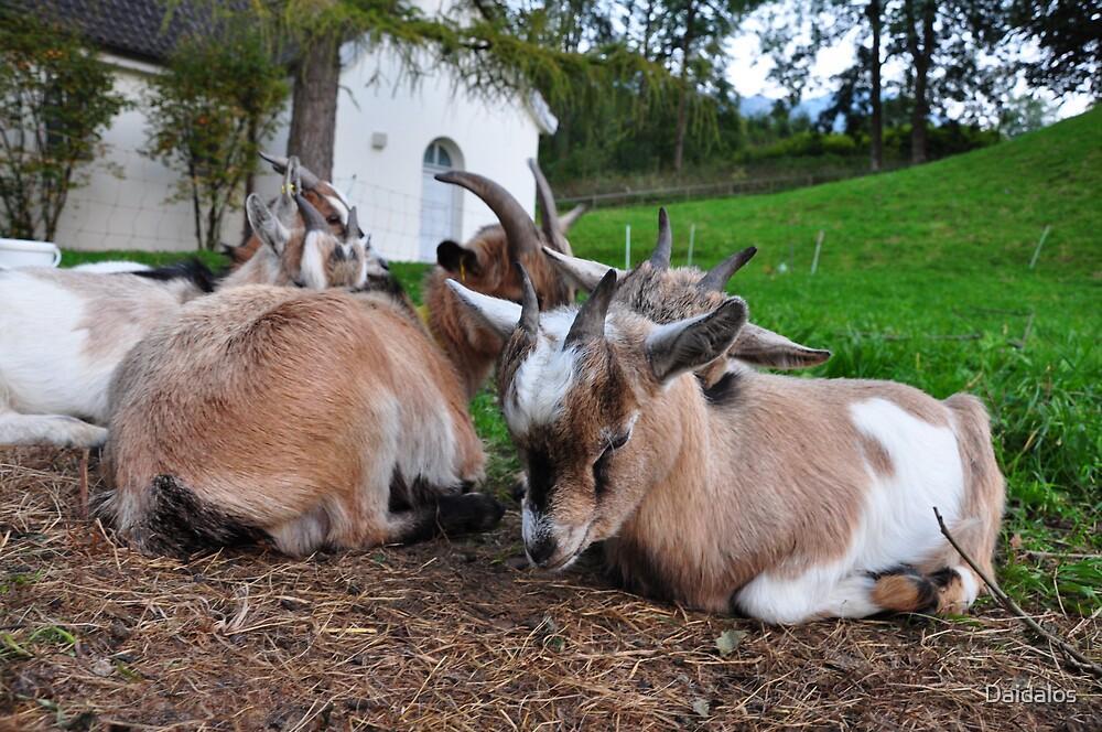 Sleepy Baby Goat by Daidalos