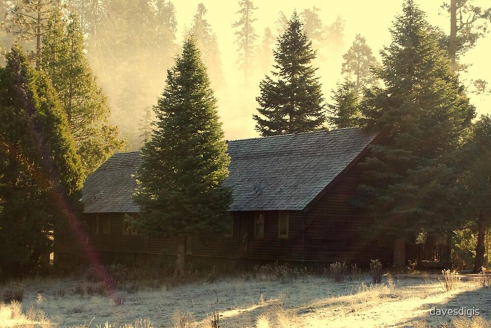 Hidden In Winters Woods by davesdigis