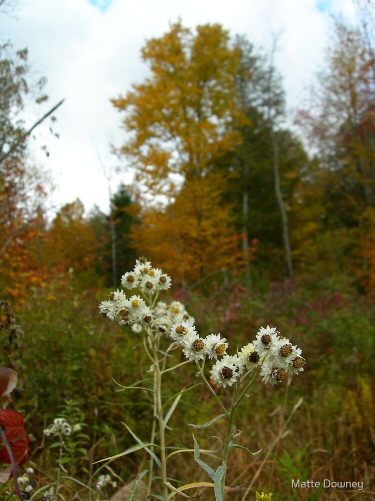 Fall Meadow by Matte Downey