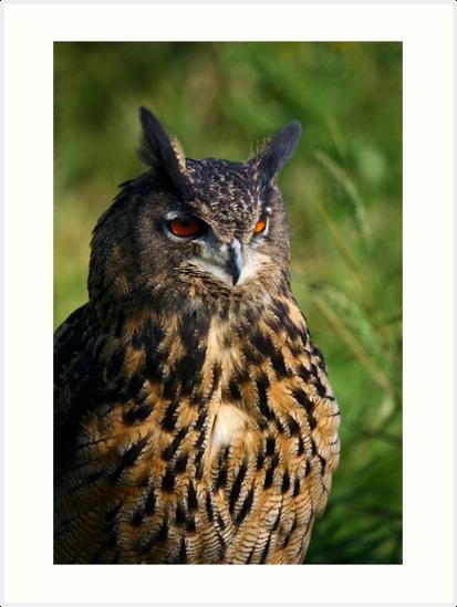 Portrait of a Eurasian Eagle Owl by Anne-Marie Bokslag