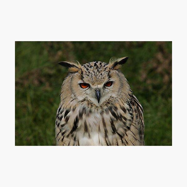 Portrait of a Siberian Eagle Owl Photographic Print