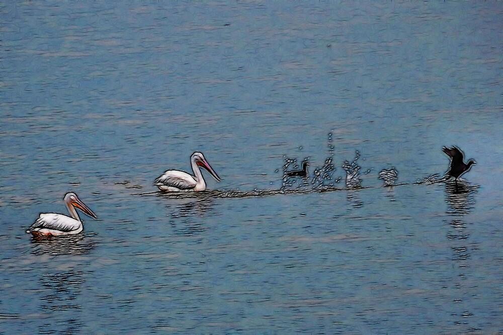 Landing Among Pelicans by Kay  G Larsen