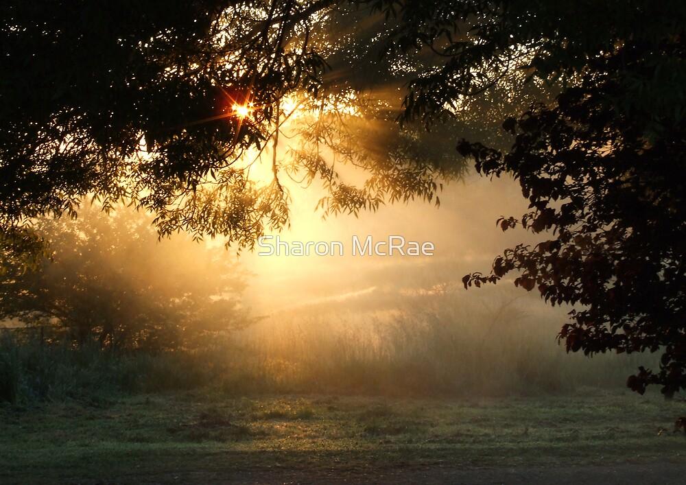 Misty Sunrise by SharonD
