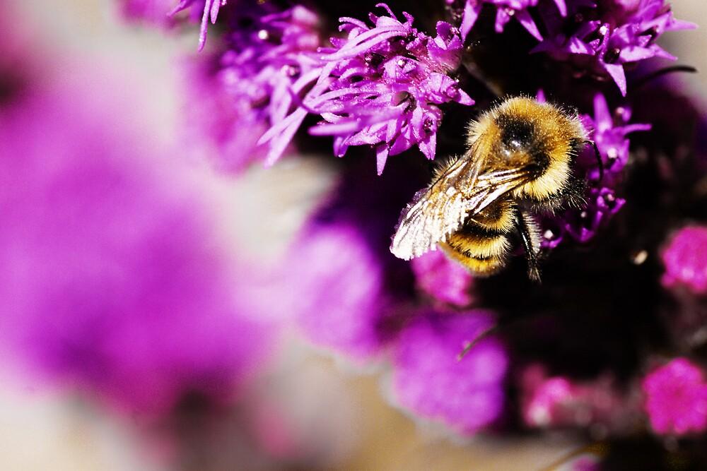 Bumble Bee by Logan Biesterfeldt