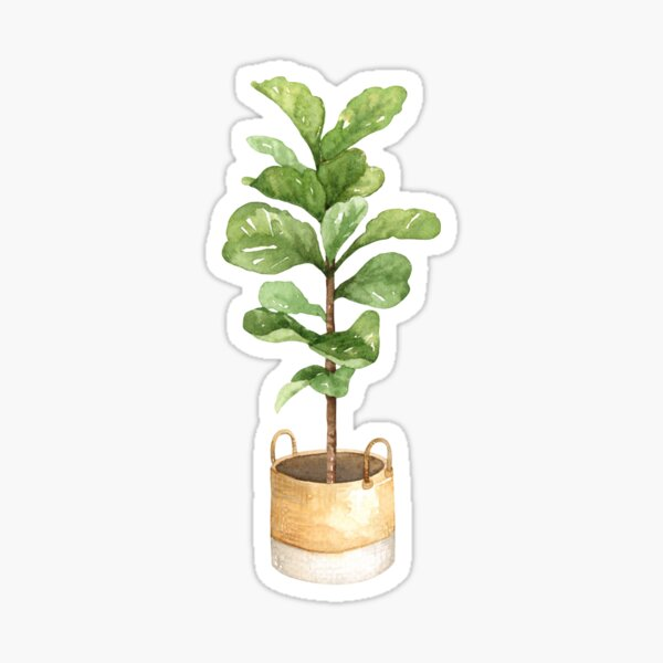 Fiddle leaf fig, houseplant, potted plant, fiddle leaf Sticker