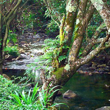 Kauai Creek by psart