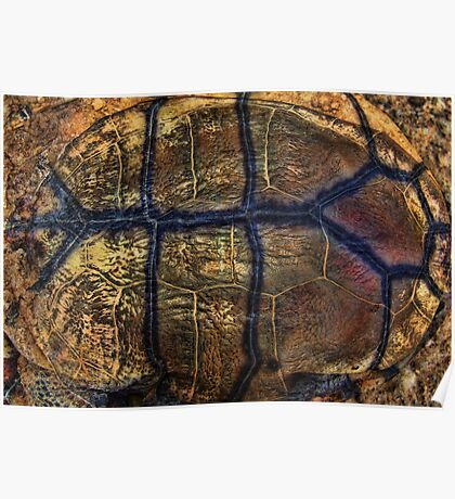 """""""Turtle Textures"""" Poster"""