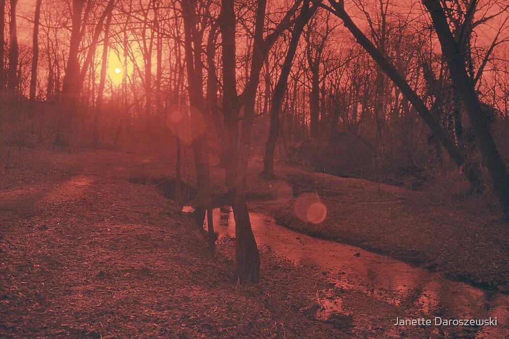 Red Woods by Janette Daroszewski