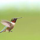 Ruby-throated Hummingbird by Jim Cumming