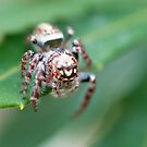 Tiny Creature by MQPhotography