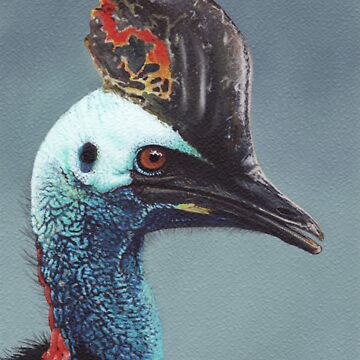 Cassowary by PottyScotty
