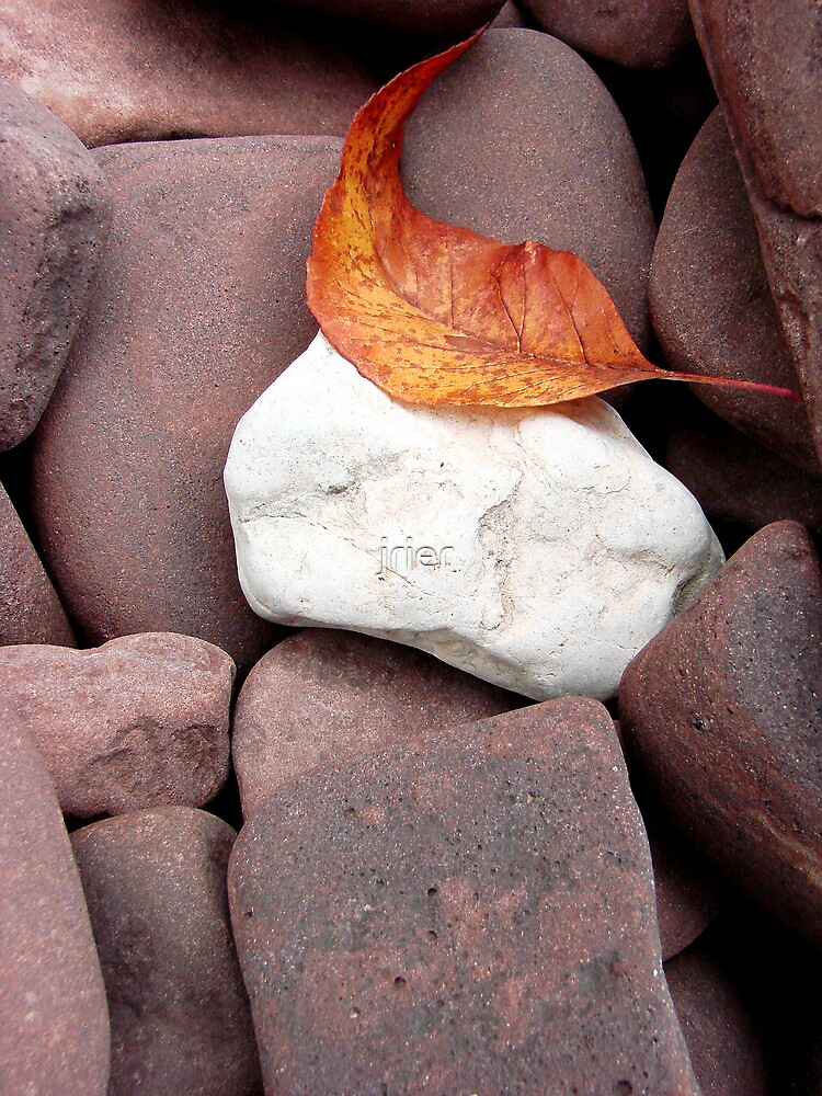 Curled Leaf & Rock by jrier