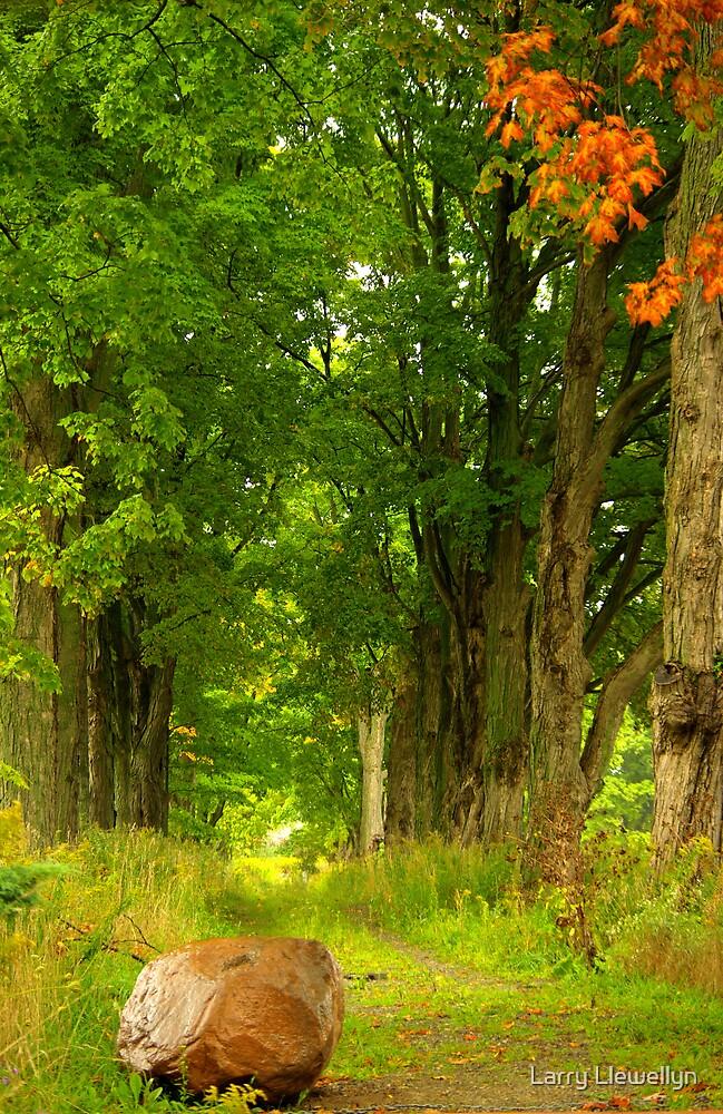 Rock'n Woods.... by Larry Llewellyn