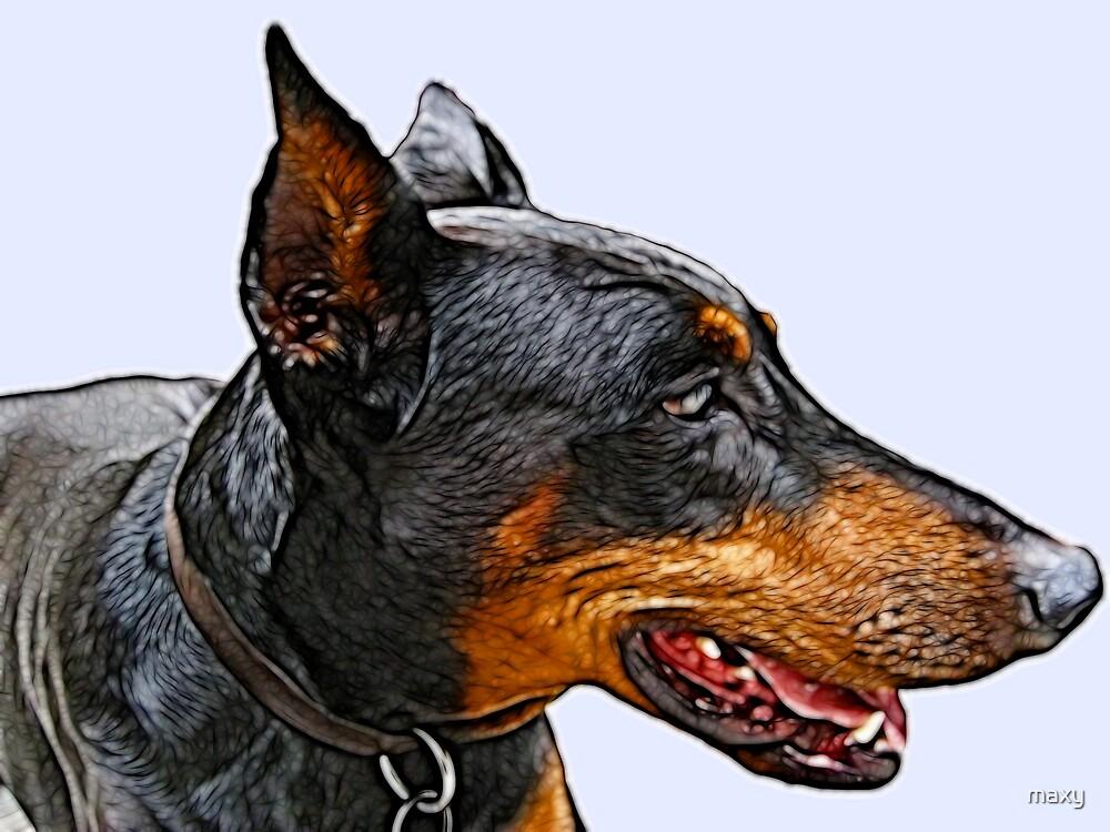 Portrait of a wonderful dog by maxy