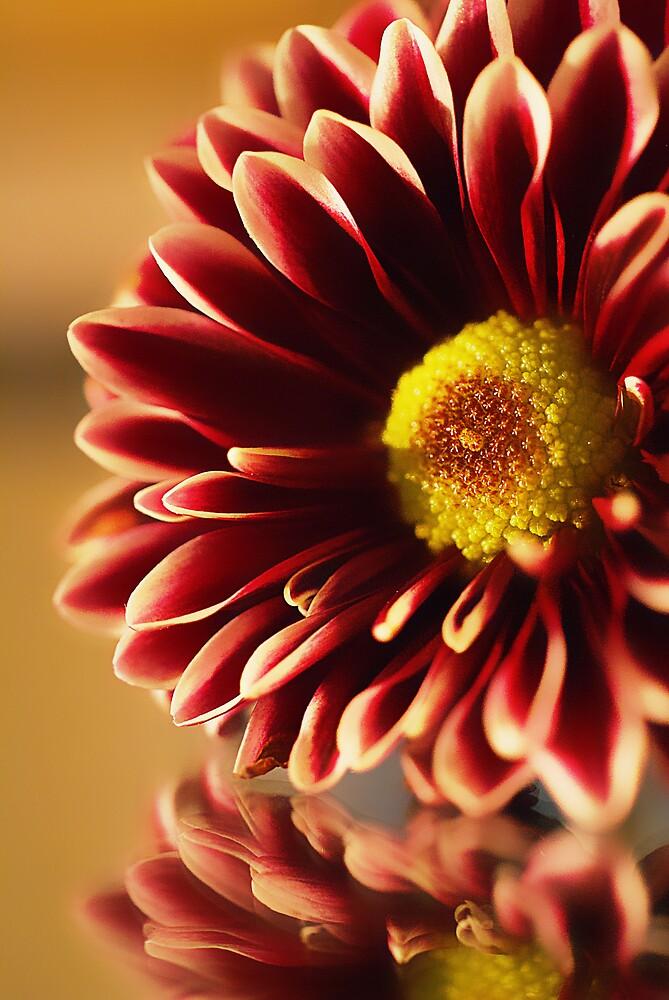 Simple Flower by jenseye