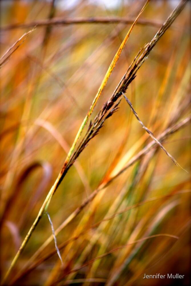 grass by Jennifer Muller