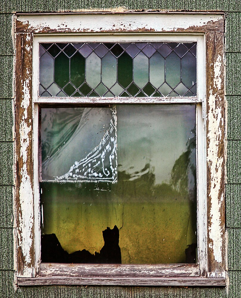 The Cat In The Window by Terry Doyle