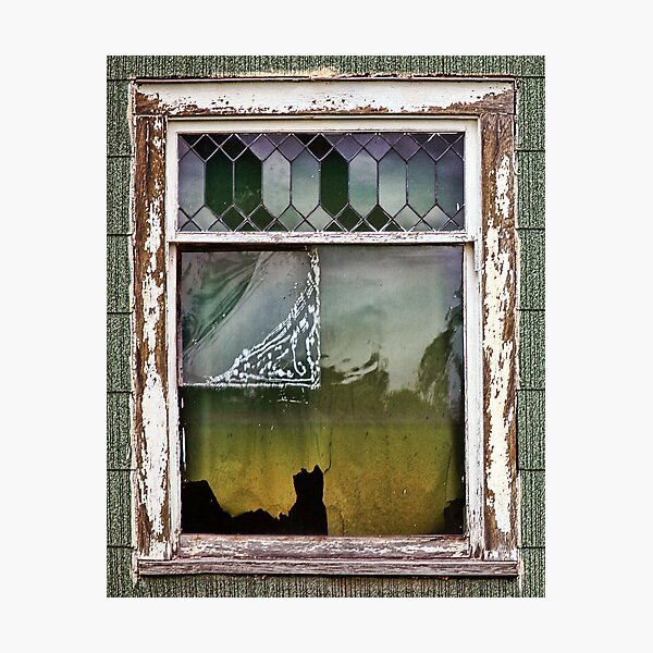 The Cat In The Window Photographic Print