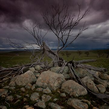 A Stormy Tree by outafocus