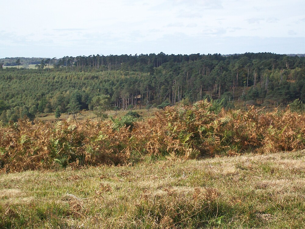 Ashdown Forest by stardust8