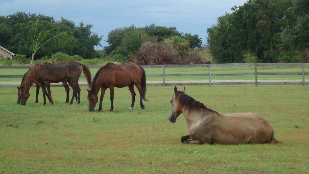 Horses by suzukipwns