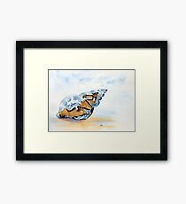 The Glass Shell Framed Print