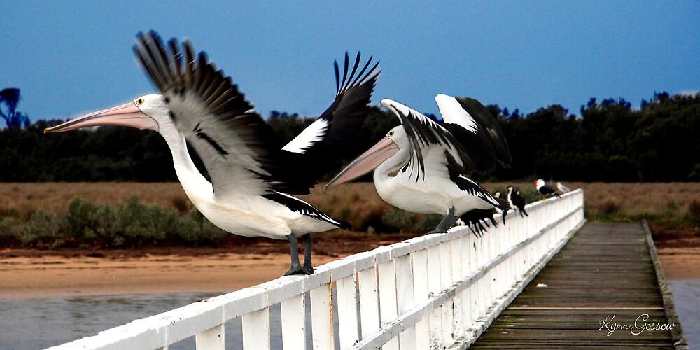 Pelican flight by akyba24