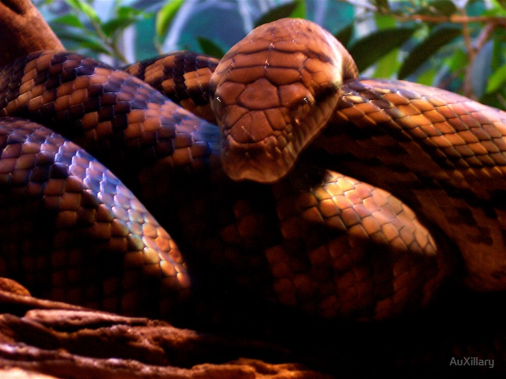 Snake Eyes  by AuXillary