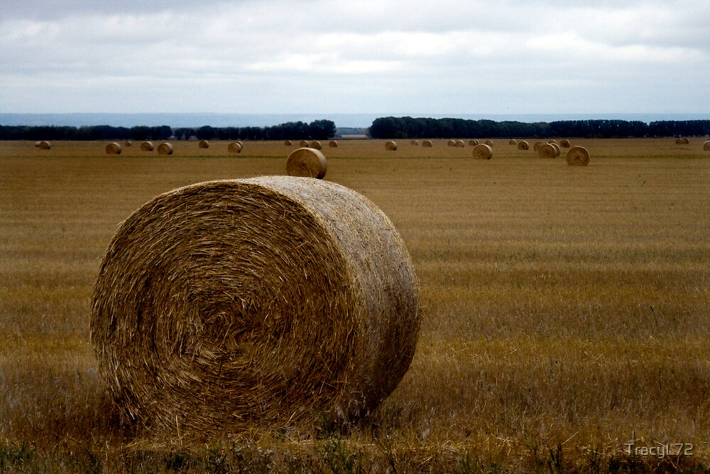 Bales by TracyL72