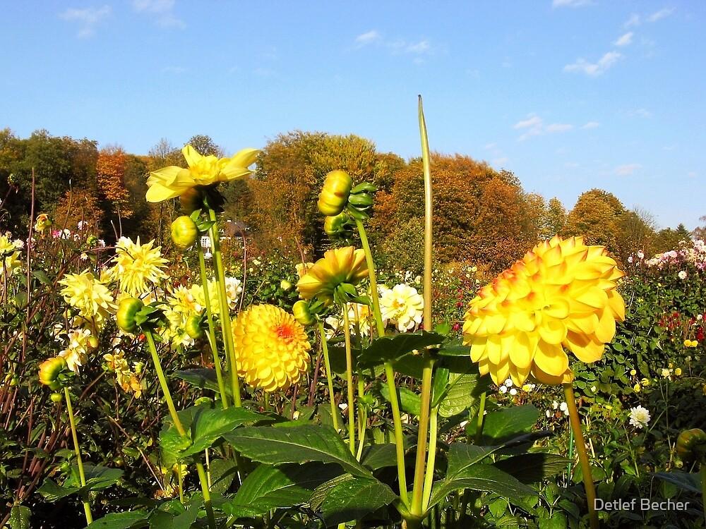 It's Autumn by Detlef Becher
