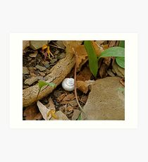 Snail Shell in the Woods Art Print