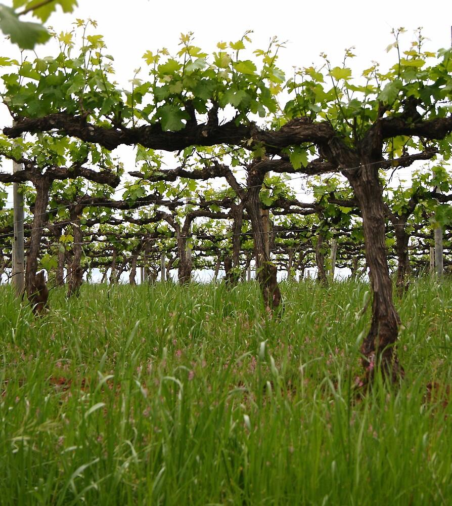 Wine Vine by DianaC