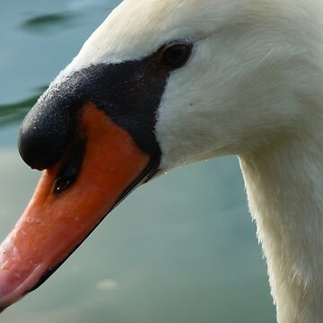 Swan by Diana16