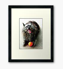Rocky's ball Framed Print