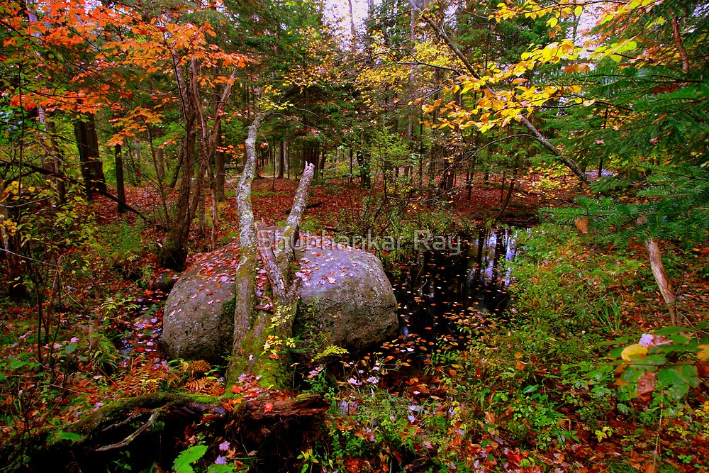 Fall Colors in a creek in Upstate New York by Shubhankar Ray