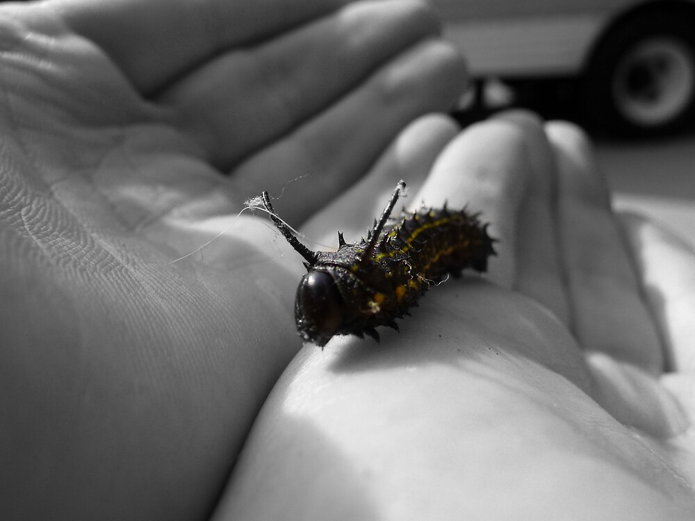 Tiny in My Hands by Diana Forgione