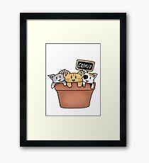 Kittens and Catnip Framed Print