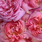 English Roses by Alyson Fennell
