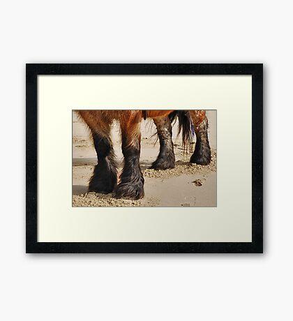 Beautiful legs..... Framed Print