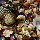 Sea Shells by mindy23